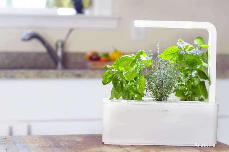 Smart Herb Garden. Продолжение истории Click & Grow