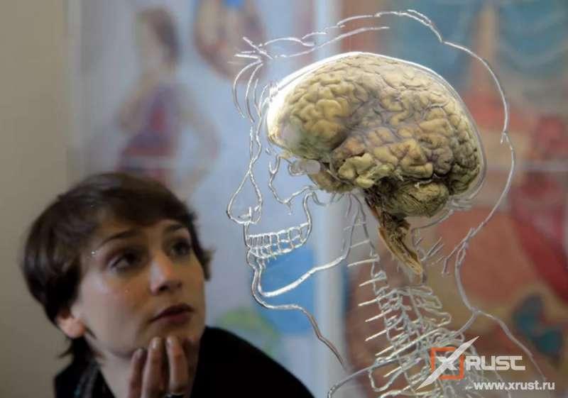 Мужчина и женщина отличаются мозгом уже до рождения